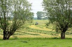 Heuernte in Hetlingen - ein Trecker wendet die Grasmahd hinter dem Elbedeich; Weiden stehen am Feldesrand.