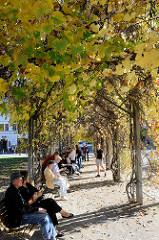 Ruhebänke im Schatten am Frauenplan gegenüber des Goethe Hauses in Weimar.