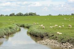 Schafe auf der Wiese am Deich bei der Hetlinger Schanze - Entwässerungsgraben.
