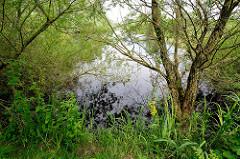 Naturschutzgebiet Hetlinger Schanze - Entwässerungsgraben mit grün bewachsenem Ufer