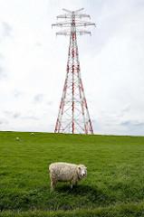 Freileitungsmast - Hochleitungsmast über die Elbe bei der Hetlinger Schanze - ein einsames Schaf steht am Deich.