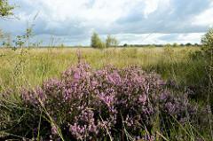 Naturschutzgebiet Worpswede, weite Wiesen - blühendes Heidekraut im Vordergrund - dunkle Gewitterwolken am Himmel.
