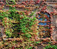 Eisenfenster im Fabrikgebäude der Soltauer Filzfabrik Gebr. Röders AG - denkmalgeschütztes Backsteingebäude, errichtet 1877. Die Fassade der historischen Industriearchitektur sind mit wildem Wein bewachsen.