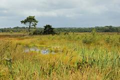 Wiesen und Wasserflächen mit Schilf - junge Birken und vereinzelt stehenden Kiefern Teufelsmoor bei Worpswede.
