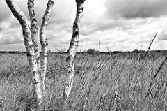 Schwarzweiß Fotografie vom Teufelsmoor bei Worpswede; Birkenstämme im hohen Gras - dunkle Wolken am Himmel.