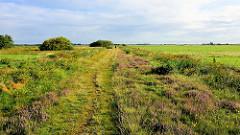 Wanderweg mit blühendem Heidekraut durch die Felder und Wiesen am Teufelsmoor bei Worpswede.