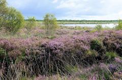 Heidelandschaft mit jungen Birken - im Hintergrund  wieder mit Wasser gefülltes Torfabbaugebiet im Teufels nur bei Worpswede - jetzt unter Naturschutz stehend.