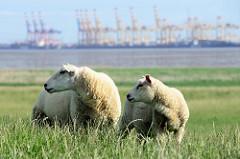Zwei Schafe auf dem Deich am Jadebusen bei  Eckwarderhörne / Halbinsel Butjadingen - im Hintergrund die Containerkräne vom JadeWeserport / Containerterminal Wilhelmshaven.