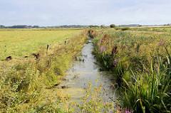 Blick über einen Entwässerungsgraben der durch Wiesen und Felder im Teufelsmoor bei Worpswede verläuft.