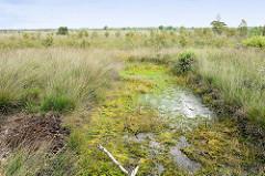 Tümpel mit Schilf im  Naturschutzgebiet Teufelsmoor, ehemaliger Torfabbau - wieder vernässt, Abbauflächen mit Wasser gefüllt.