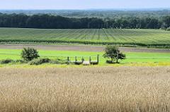 Holzsteg / Bootssteg am Weyerberg in Worpswede; von dort hat man einen traumhaften Blick über die Felder und Wiesen.