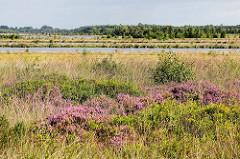 Naturschutzgebiet Teufelsmoor, ehemaliger Torfabbau - wieder vernässt, Abbauflächen mit Wasser gefüllt; blühendes Heidekraut im Vordergrund.
