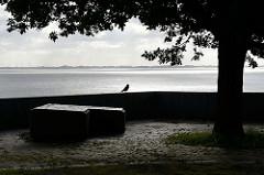 Gegenlichtaufnahme am frühen Morgen an der Nordsee in Wilhelmshaven; ein Vogel sitzt auf der Mauer unter einem Baum - schwarz-weiß Fotografie.