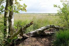 Birken am Wiesenrand - Blick über das Teufelsmoor, ehemaliges Torfabbaugebiet bei Worpswede.