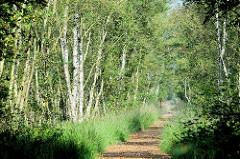 Ein Wanderweg mit Rindenmulch belegt führt durch ein dicht bewachsenes Birkenwäldchen Teufelsmoor bei Worpswede.
