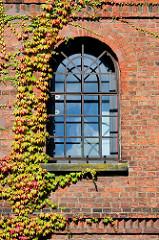 Eisenfenster im Fabrikgebäude der Soltauer Filzfabrik Gebr. Röders AG - denkmalgeschütztes Backsteingebäude, errichtet 1877. Teile der Fassade der historischen Industriearchitektur sind mit wildem Wein bewachsen.