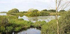 Seelandschaft mit hohem Gras und Büschen am Ufer - Teufelsmoor bei Worpswede