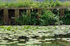 Ufer mit Eisenspundwand am Billbrookkanal in Hamburg Hammerbrook; Wildkraut wächst am Wasser - gelbe Teichrosen / Teichmummel (Nuphar lutea) bedecken die Wasseroberfläche.