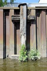 Verwitterter Streichbalken aus Holz an einer stillgelegten Kaianlage im Hamburger Hafen; Wildkraut wächst aus dem verwitterten Holz der Balken - ein sogen. Streichbalken schützt die Kaianlage vor direkten Kontakt mit Schiffswänden.
