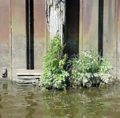 Verwitterter Streichbalken aus Holz an einer stillgelegten Kaianlage im Hamburger Hafen; Wildkraut wächst aus dem alten Holz der Balken - ein sogen. Streichbalken schützt die Kaianlage vor direkten Kontakt mit Schiffswänden.