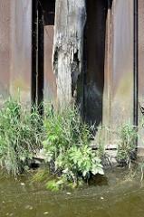 erwitterter Streichbalken aus Holz an einer stillgelegten Kaianlage im Hamburger Hafen; Wildkraut wächst aus dem alten Holz der Balken - ein sogen. Streichbalken schützt die Kaianlage vor direkten Kontakt mit Schiffswänden.