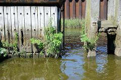 Wildkraut / Unkraut wächst aus einer Holzwand an einer Kaianlage im Hamburger Hafen; re. Teile eines Holzdalbens.