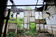 Ruine eines Lokschuppens, das Dach ist eingestürzt, Wildkraut / Unkraut wächst durch Fenster und Tür in das stark verfallene Fachwerk-Gebäude.