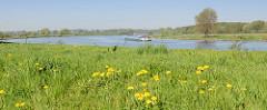 Blühender Löwenzahn auf dem Deich der Maas auf dem Weg nach Roermond - Binnenschiffe transportieren ihre Ladung auf dem Fluß.