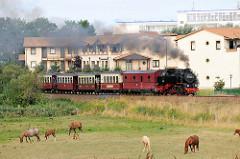 Die Bäderbahn MOLLI verlässt unter Dampf den Badeort Kühlungsborn - im Vordergrund eine Weide mit Pferden.