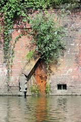 Alte Kaimauer / Ziegelmauer mit zerstörtem Streichdalben im Neuhöfer Kanal von Hamburg Wilhelmsburg - aus den Fugen wächst eine junge Weide.