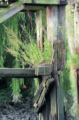 Alte Holztreppe / Wassertreppe am Ufer der Billwerder Bucht in Hamburg Rothenburgsort - Wildkraut und junge Bäume wachsen aus dem Holz der stillgelegten Treppe.