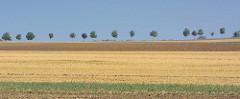 Abgeerntete Felder / Acker auf der Insel Poel - Mecklenburg Vorpommern.