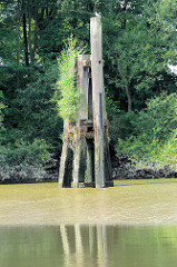 Ein Holzdalben steht bei Niedrigwasser / Ebbe im Saalehafen im Hamburger Stadtteil Grasbrook frei - Wildkraut spriesst aus dem alten Holz.