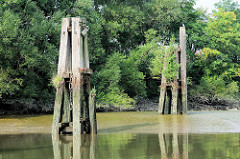 Holzdalben stehen bei Niedrigwasser / Ebbe im Saalehafen im Hamburger Stadtteil Grasbrook frei - Wildkraut spriesst aus dem alten Holz.