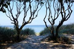 Knorrige Bäume, Sanddüne / Blick auf die Ostsee; Insel Poel - Mecklenburg Vorpommern.