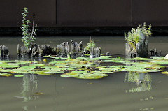 Mit Wildkraut bewachsene Holzreste im Wasser vom Jaffe David Kanal in Hamburg Wilhelmsburg.