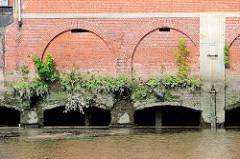 Aussenmauer eines Lagerhauses am Saalehafen im Hamburger Stadtteil Grasbrook - Wildkraut wächst in den Mauerritzen der Ziegelmauer.