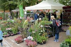 Aussteller / Markstand mit Pflanzen, Stauden auf dem Kartoffelmarkt vom Gut Wulksfelde.