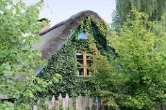Mit Efeu bewachsener Giebel einer Reetdachkate an der Lohe im Hamburger Stadtteil Duvenstedt.