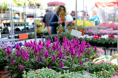 Blumenstand auf dem Wochenmarkt Tibarg im Hamburger Stadtteil Niendorf.