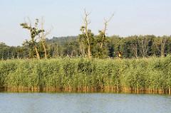 Westoder auf dem Weg nach Stettin; dichter Baumbestand bis ans Ufer der Oder.  Die Oder bildet einen Teil der Grenze zwischen Polen und Deutschland - an Land ist zwischen dem Schilf  ein deutscher Grenzpfahl zu erkennen.