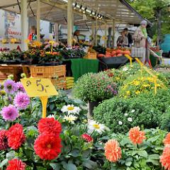 Wochenmarkt im Hamburger Stadtteil Neustadt - Marktstand mit Pflanzen und Blumen.