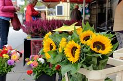 Blumenstand auf dem Wochenmarkt Grundstraße im Hamburger Stadtteil Eimsbüttel; Sonnenblumen und dem Hintergrund Heidekraut.