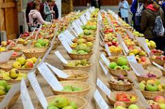 Die Norddeutschen Apfeltage sind Teil beim Wulksfelder Kartoffelmarkt in Tangstedt / Hamburg Duvenstedt; Körbe mit unterschiedlichen Apfelsorten stehen auf einem langen Tisch in einer Halle auf dem Gut Wulksfelde.