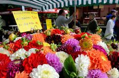 Blumenstand auf dem Wochenmarkt in Hamburg Langenhorn / Schmuggelstieg;  Blumensträuße mit Vierländer Dahlien.