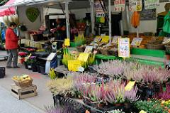 Marktstand mit Blumen / Heide auf dem Wochenmarkt Grundstraße im Hamburger Stadtteil Eimsbüttel.