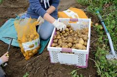 Kartoffelfest auf Gut Wulksfelde in Tangstedt / Duvenstedt; auf dem Kartoffelfeld können die Besucher die Kartoffeln selber ernten.
