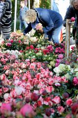 Blumenstand mit frischen Rosen auf dem Wochenmarkt Tibarg im Hamburger Stadtteil Niendorf.