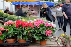 Marktstand auf dem Wochenmarkt  in Hamburg Sasel -  Blumenstand.