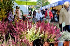 Blumenstand mit Heidekraut  / Erika auf dem  Wochenmarkt Tibarg im Hamburger Stadtteil Niendorf.